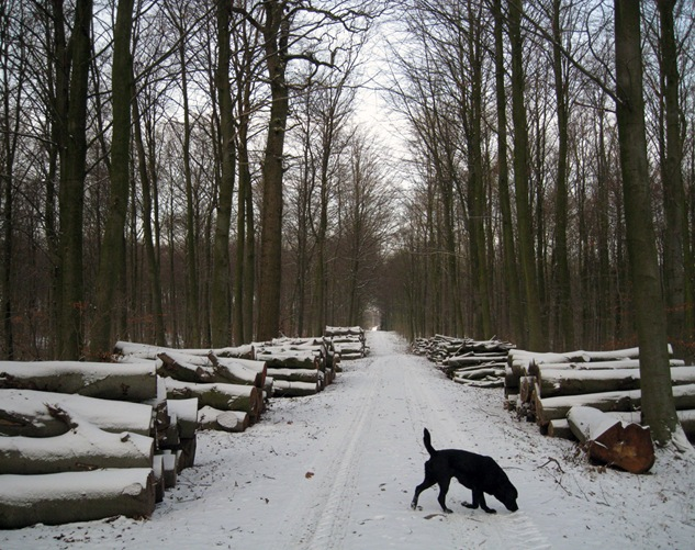 skov by sisterbonde