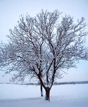 blu tree 2 by sisterbonde