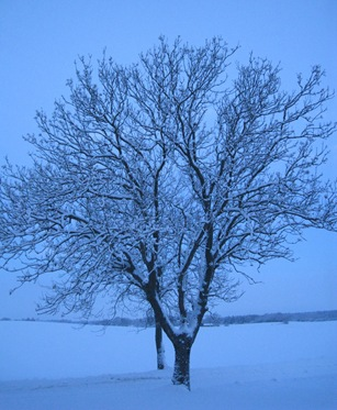 blu tree by sisterbonde