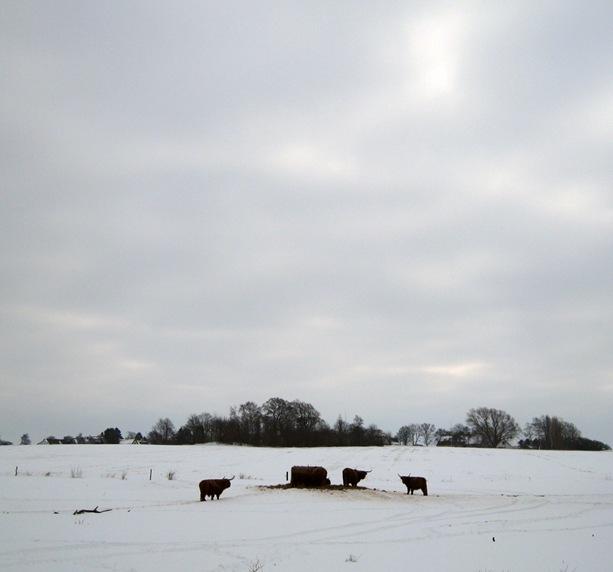 vinterkoer by sisterbonde