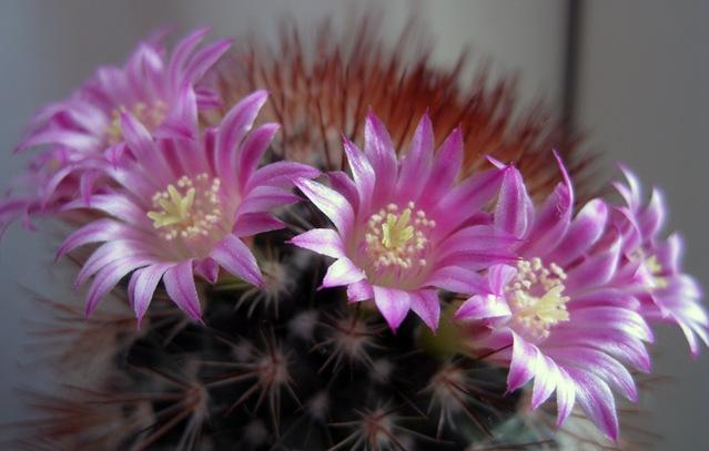 kaktus by sisterbonde