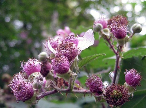 blomst by sisterbonde